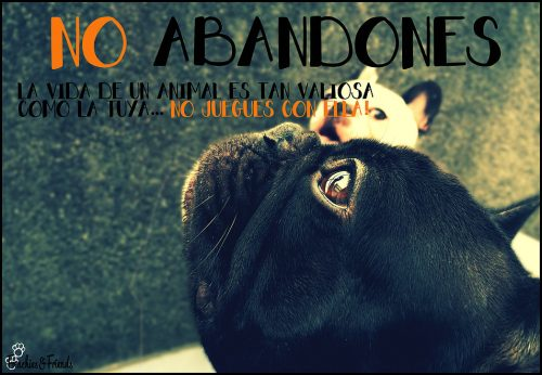 Frenchies & Friends - adopcion